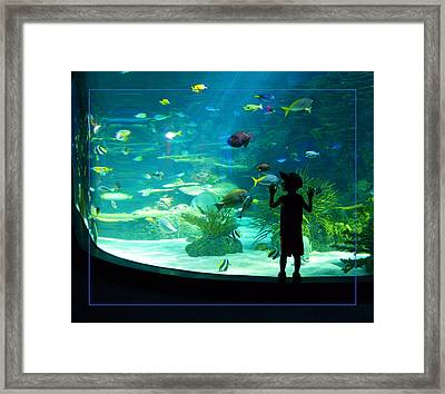 I See Fish Framed Print by Robert Clayton