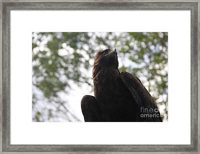 I See.... Framed Print