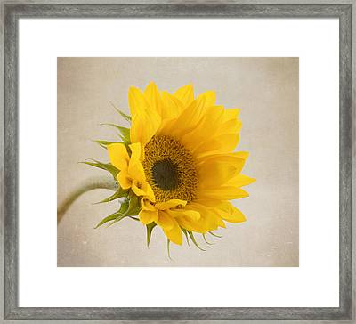 I See Sunshine Framed Print by Kim Hojnacki