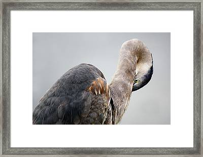 I See You - # 10 Framed Print by Paulette Thomas