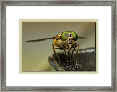 I See You 001 Framed Print by Kevin Chippindall