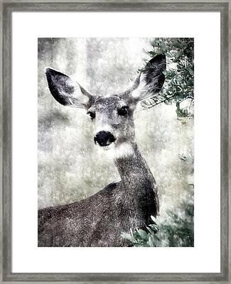 I See You Framed Print by Barbara D Richards