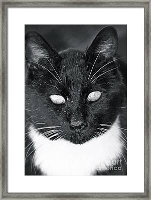 Framed Print featuring the photograph I See You by Barbara Dudley