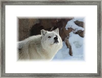 I See You Framed Print by Brenda Henley