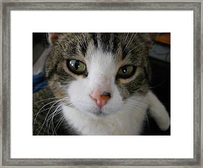 I See You Cat Framed Print