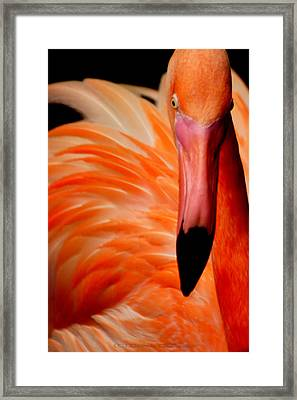 I See You Framed Print by DerekTXFactor Creative