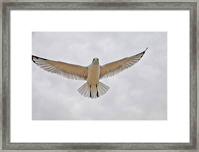 I See You Do You See Me Framed Print