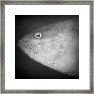 I See You - Fish Framed Print by Patricia Januszkiewicz