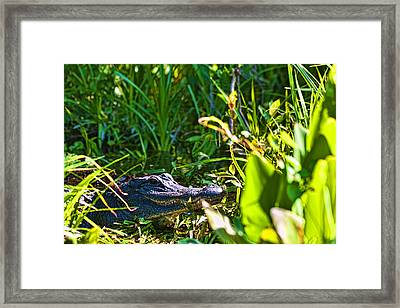 I See You Framed Print by Frank Feliciano