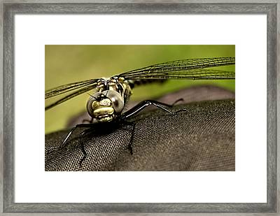 Framed Print featuring the photograph I See You by Gary Wightman