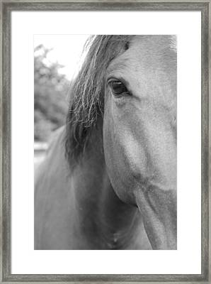 I See You Framed Print by Jennifer Ancker