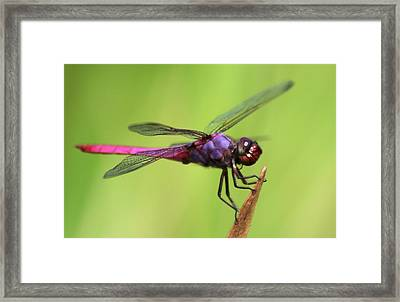 Dragonfly - I See You Framed Print