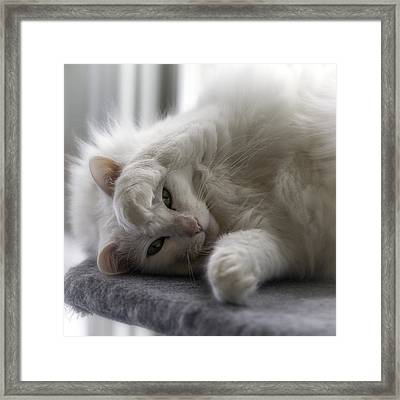 I See You Framed Print by Lynn Palmer