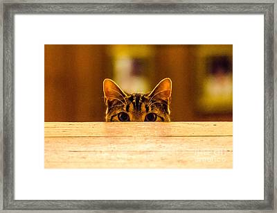 I See You Framed Print by Mike Ste Marie