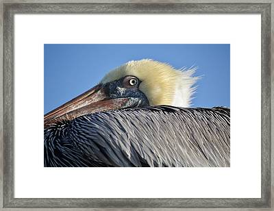 I See You Framed Print by Paulette Thomas