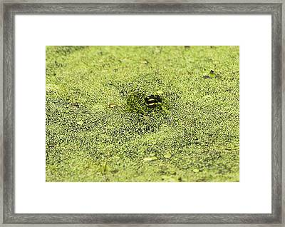 I See You Framed Print by Ricky L Jones