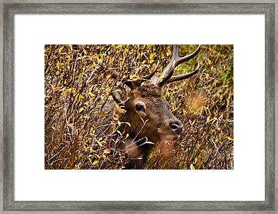 I See You Framed Print by Steven Reed
