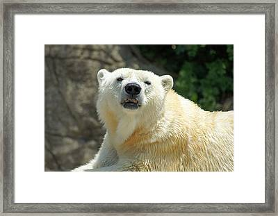 I See You Framed Print by Thomas Fouch
