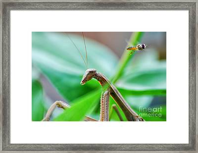 Framed Print featuring the photograph I See You by Thomas Woolworth