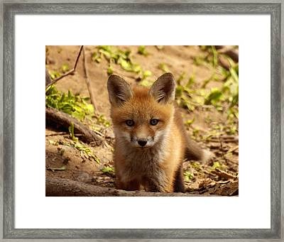 I See You Framed Print by Thomas Young