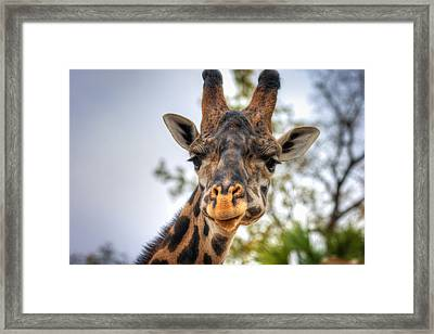 I See You Framed Print by Tim Stanley