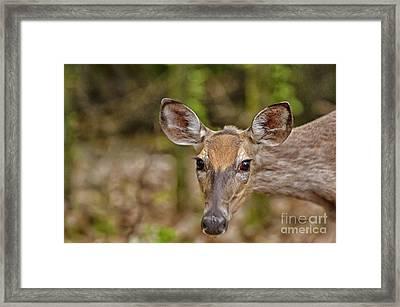 I See You Framed Print