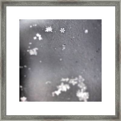 I Spy A Perfect Little Snowflake... :) Framed Print