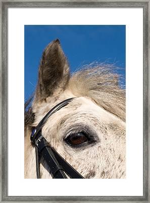 I Spy Framed Print by Paul Lilley