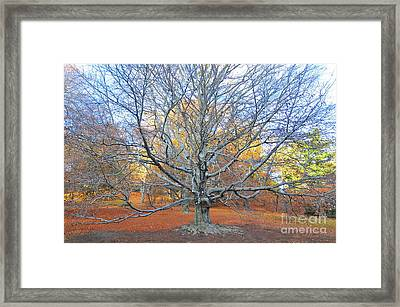 I Stand Alone Framed Print by Catherine Reusch Daley
