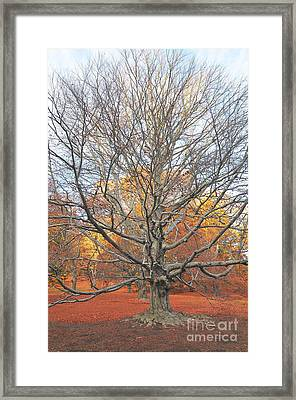 I Stand Alone II Framed Print by Catherine Reusch Daley