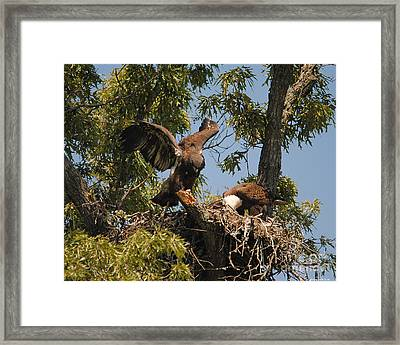 I Think I Can Fly Framed Print by Jai Johnson