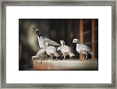 I Think I Can Fly  Framed Print by Saija  Lehtonen