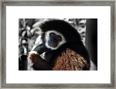 I Think I Could Like You Framed Print