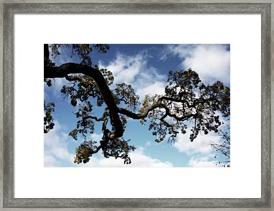 I Touch The Sky Framed Print by Laurie Search