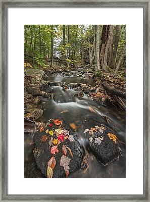I Want More Framed Print by Jon Glaser