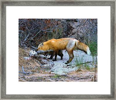 I Want Some Framed Print by MoJophotos Photography