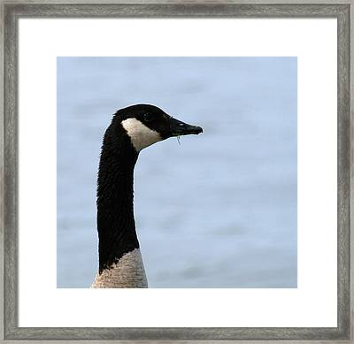 I Was Not Eating Your Lawn  Framed Print by Thomas Young