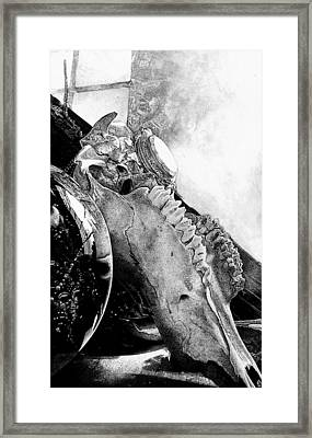 I Will Show You Fear In A Handful Of Dust Framed Print by Amanda Zylstra