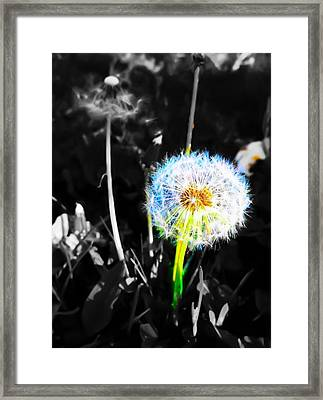 I Wish....... Framed Print by  Julia Gatti
