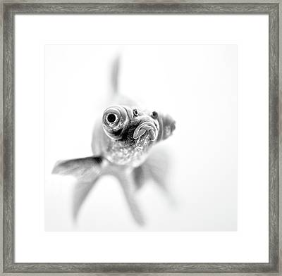I'm Ready For My Close Up... Framed Print
