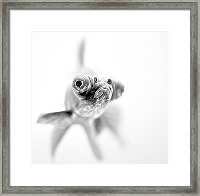 I'm Ready For My Close Up... Framed Print by Paul