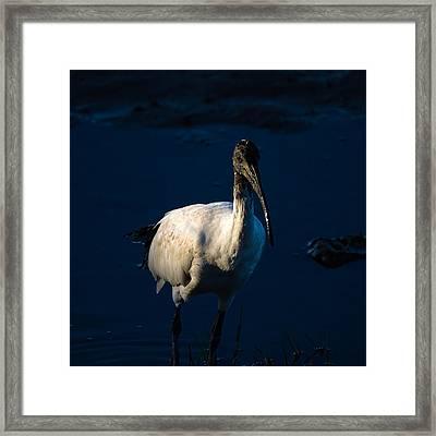 Ibis By Moonlight Framed Print by Mr Bennett Kent