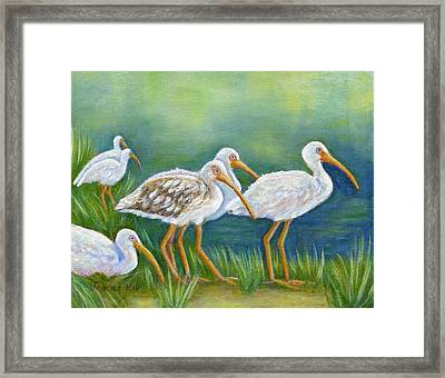 Ibis Flock With Juvenile Framed Print