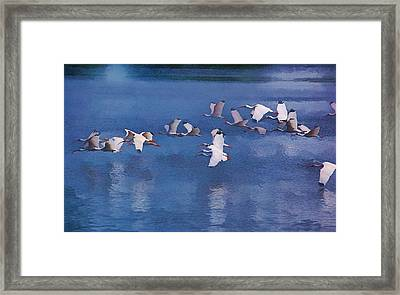 Framed Print featuring the photograph Ibis In Flight by Pamela Blizzard