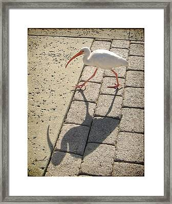 Ibis Framed Print by The Art of Marsha Charlebois