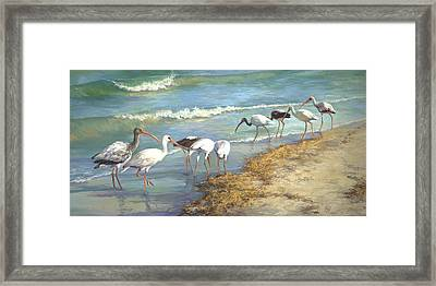 Ibis On Marco Island Framed Print by Laurie Hein