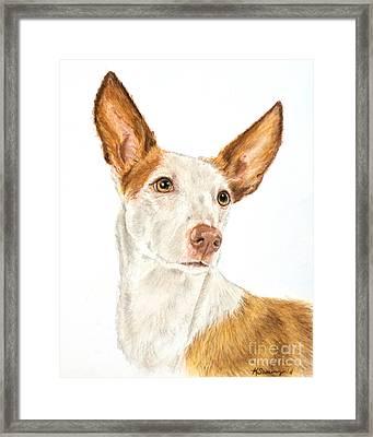Ibizan Hound In Pastel Framed Print