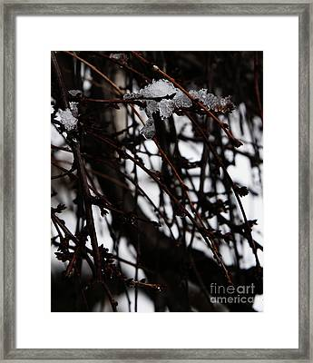 Framed Print featuring the photograph Ice 2 by Linda Shafer