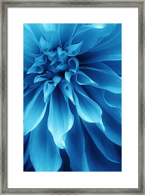Ice Blue Dahlia Framed Print