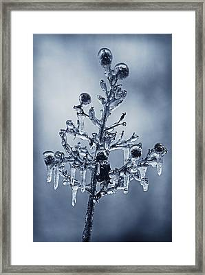 Ice Bouquet Framed Print